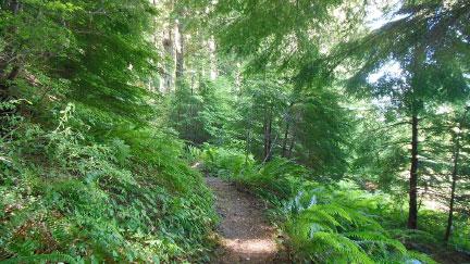 Seniors Forest
